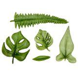 Sil. formička - tropické listy - JUNGLE