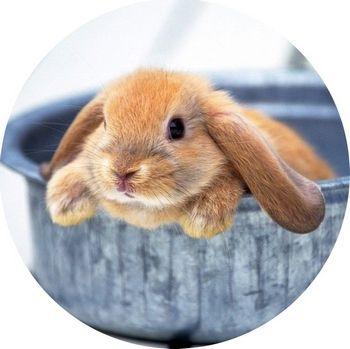 marc.oblátka - zajačik